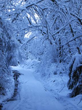 Snowydrive