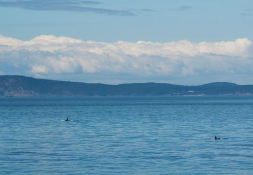 Orca3crop