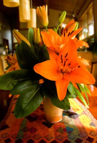 Orangelilies10