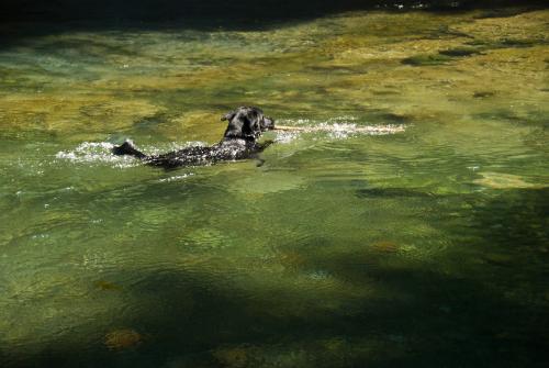 Waterdog16