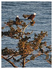 Eagles1_2